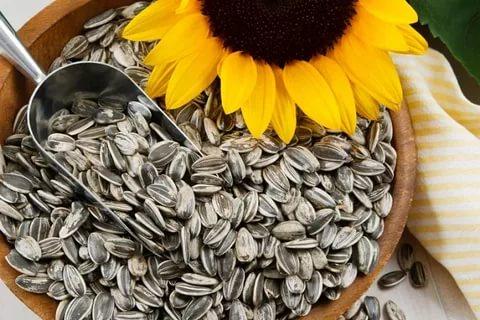 Семена подсолнечника гибриды раннеспелые, классические, устойчивые к заразихе