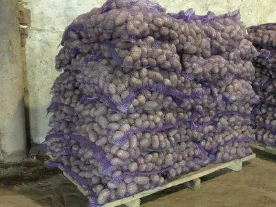Картофель оптом от фермеров г. Тольятти