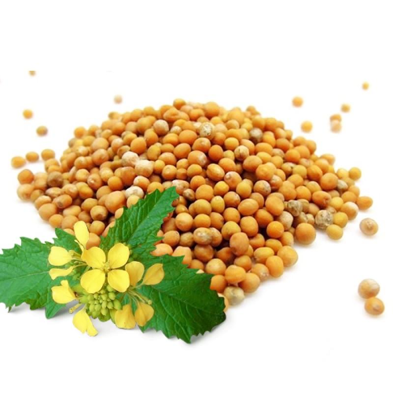 Семена горчицы сарептской, чрной и белой