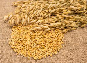 Семена ярового овса Валдин-765 на сх сезон 2020