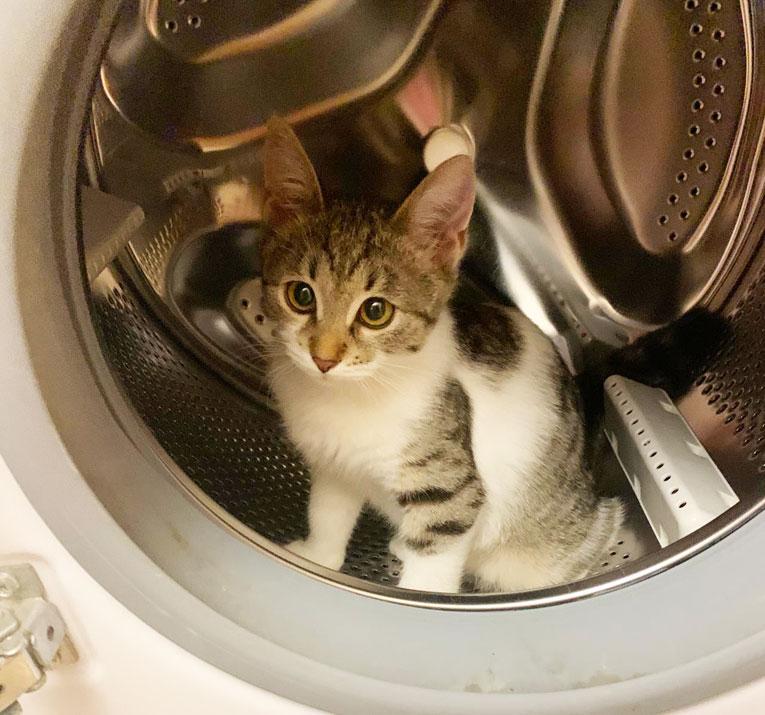 Джерри  идеальный котенок ищет дом. 3 месяца