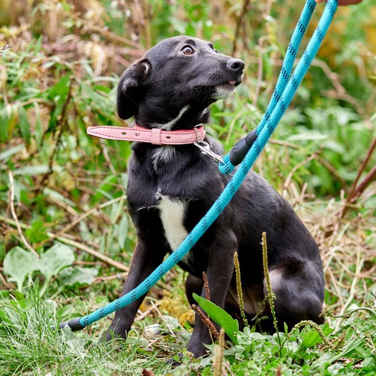 Миниатюрный щенок Сьюзи в дар. 5 кг, в холке 15 см, 6 мес.