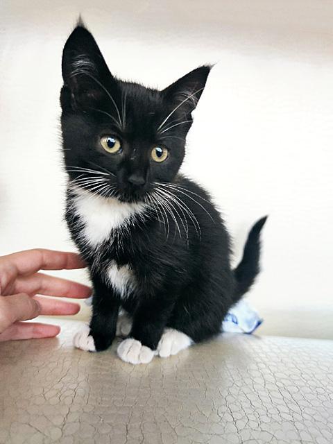 Очень красивые котята, мальчик и девочки в добрые руки